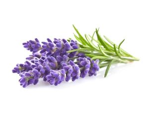lavander for sciatica pan. Sciatica pain natural home remedies