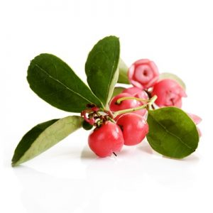 wintergreen for sciatica pain. Sciatica pain natural home remedies